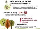 Как не потеряться в лесу: рекомендации по безопасности